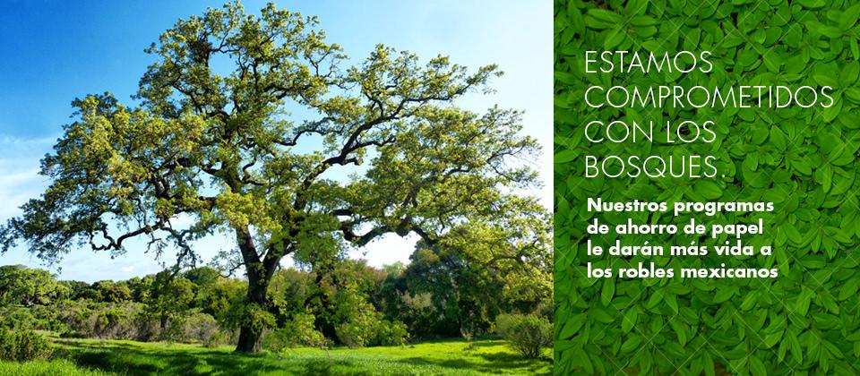slide-sustentabilidad-1
